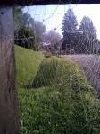 spider-web-2-sm