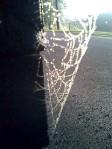 spider-web-3-sm