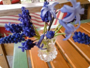 grape hyacinth in vase