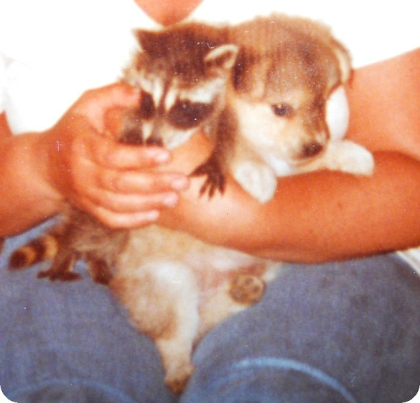 pup coon 2