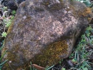 rock-mossy