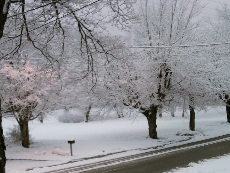 snowy trees-sm-2
