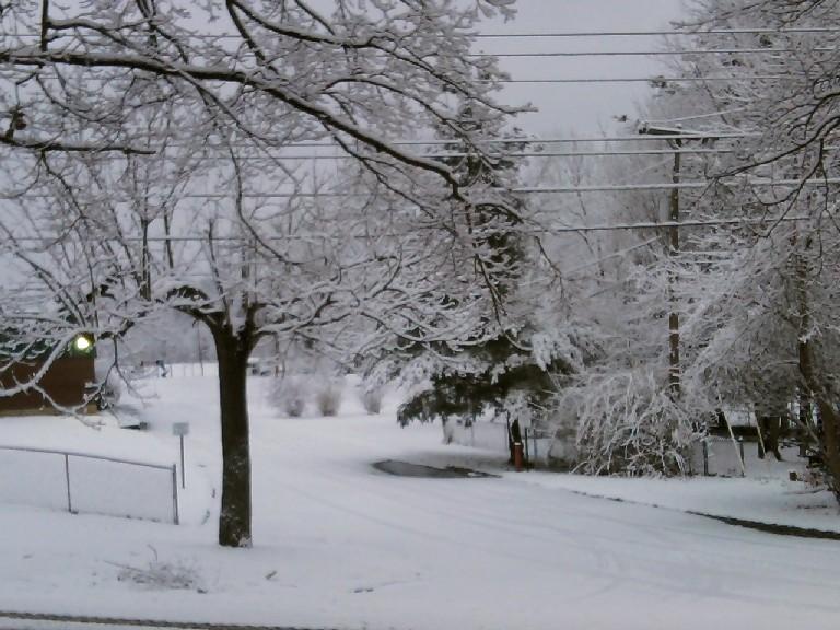 snowy trees-sm