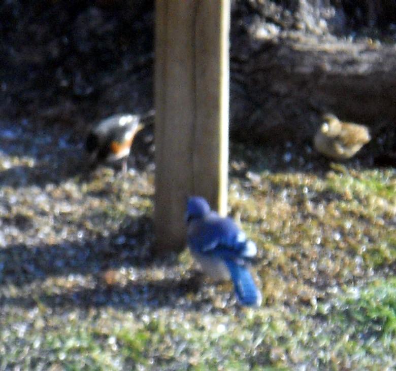 birderfeeder 001