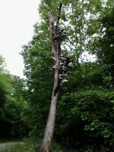 shoe tree-old-2