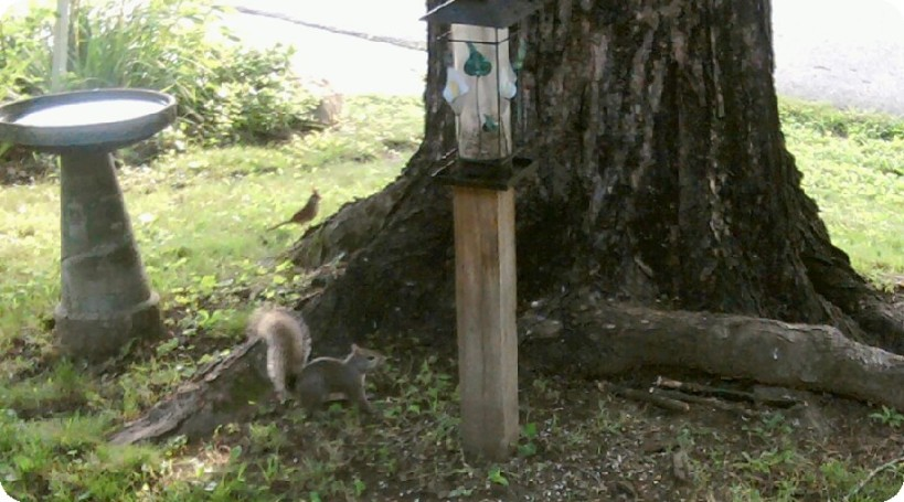 squirrel and redbird