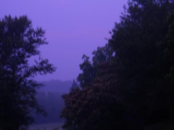 fog-dawn--trees-July-18-2013