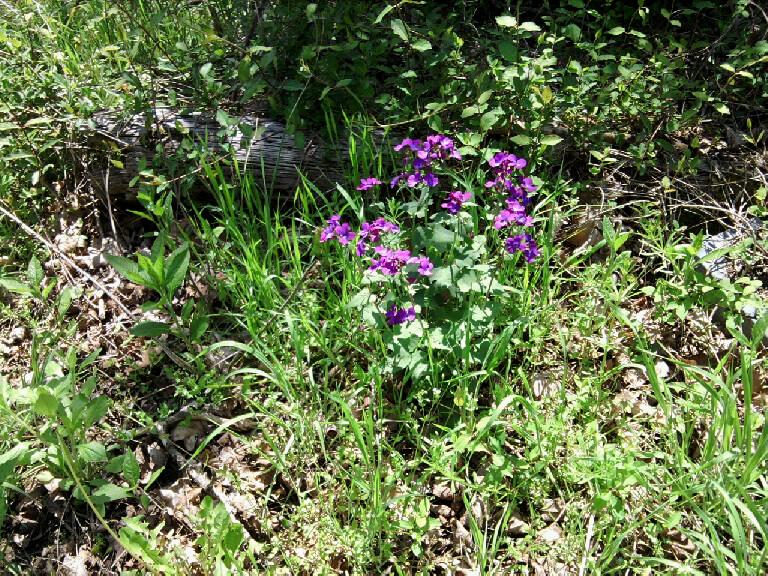 fushia-wildflowers