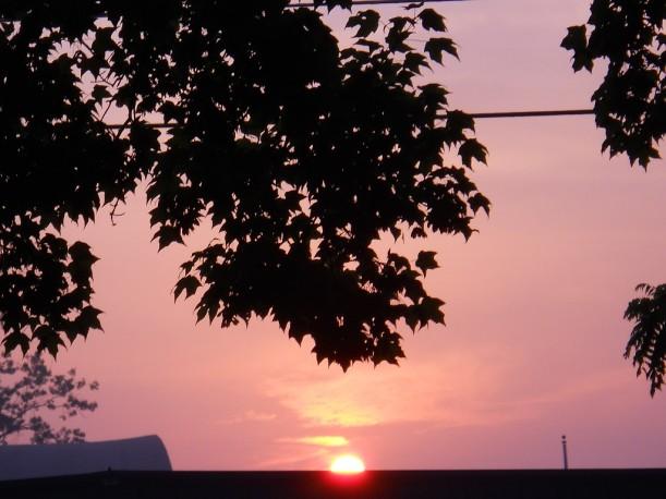 Golden Light-July-18-2013 001-sm