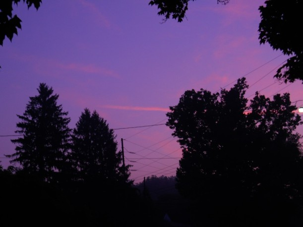 Purple-Dawn-trees-July-18-2013 007