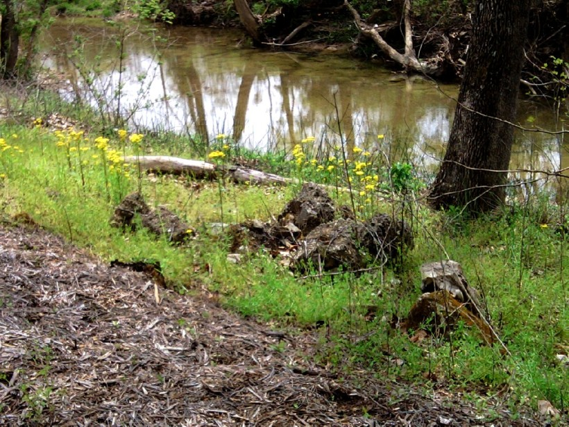 Creek-Yellow Flowers