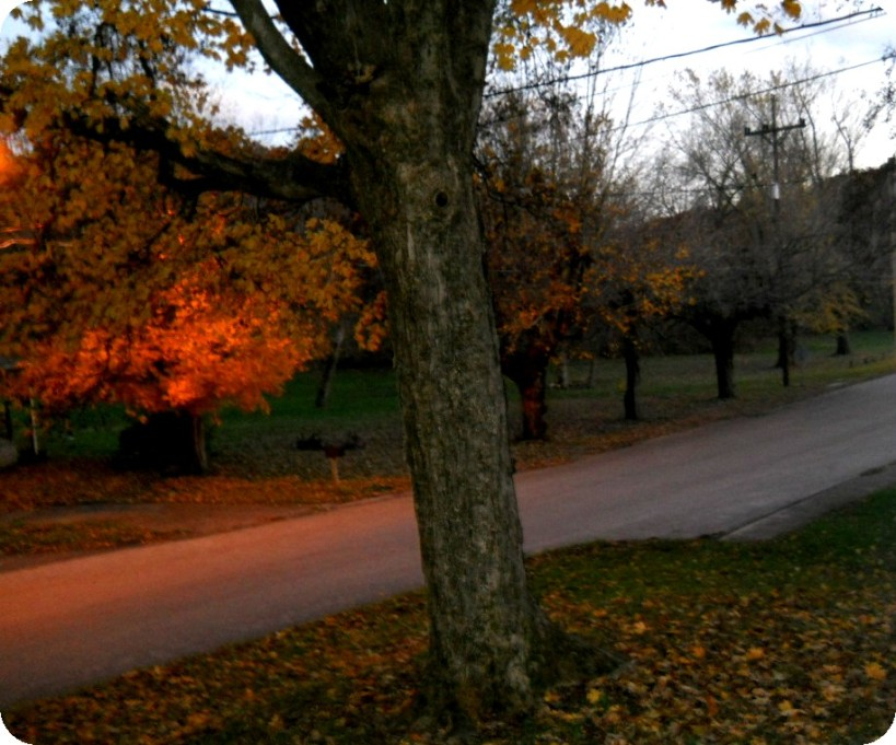 Autumn-Nov-2013 013