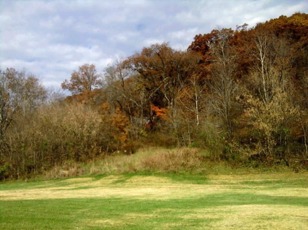 Autumn woods-2