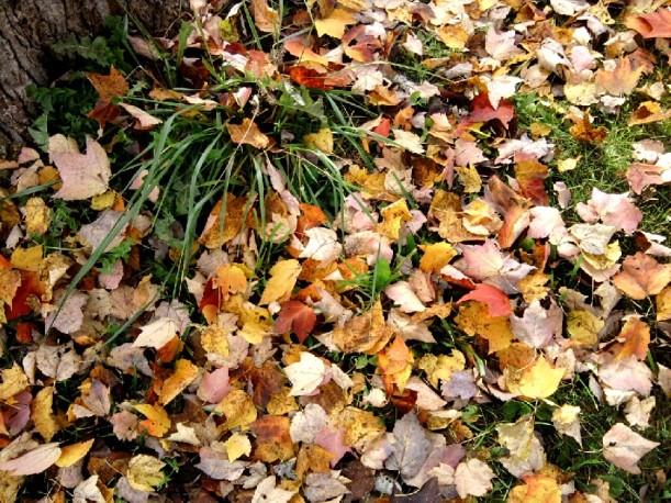 Autumn5-leaves