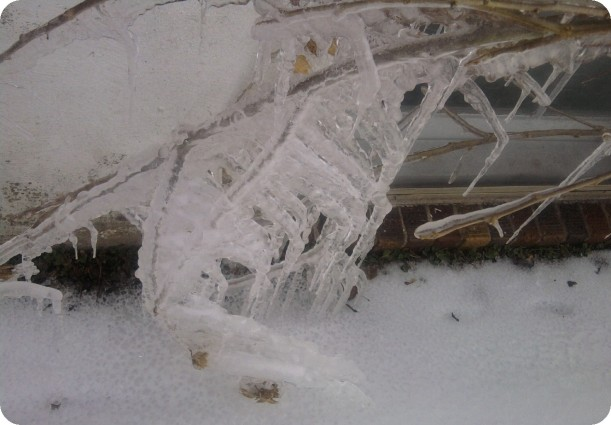 ice on plants-4