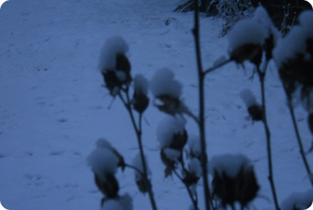 snow and ice 010
