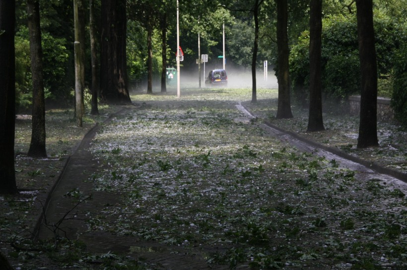 leaves downed by hail