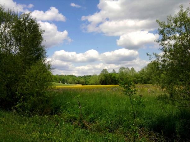 landscape-yellow field
