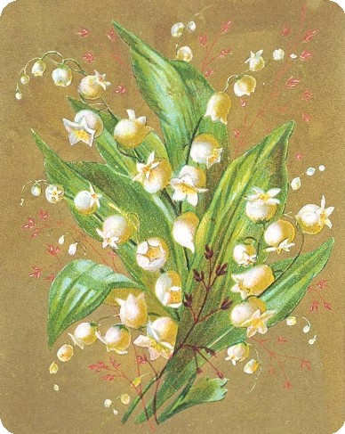 Lilly-of-the-valley-sm