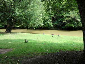Ducks Along The River