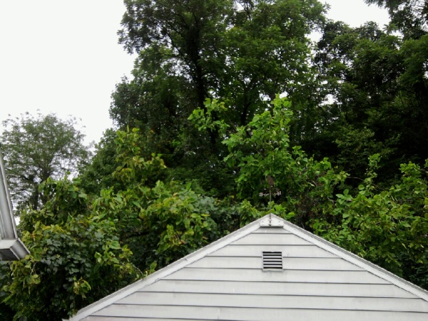 tree on garage-2