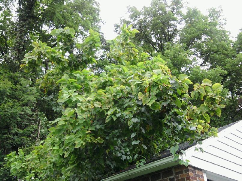 tree on garage-3