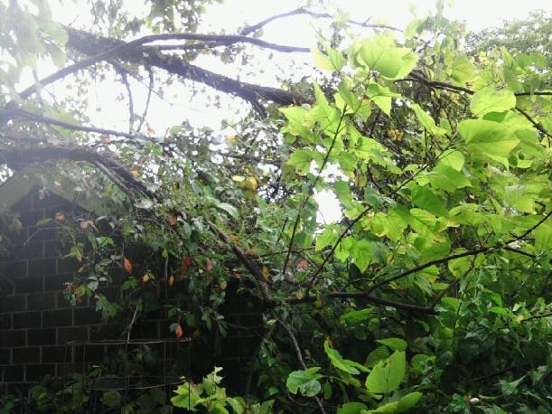 tree on garage-4