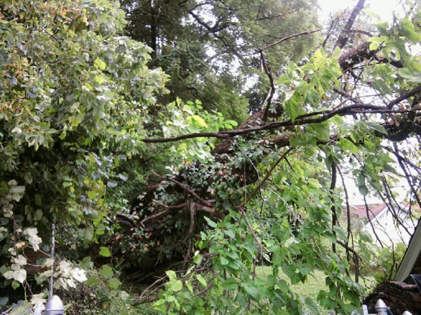 tree on garage-6