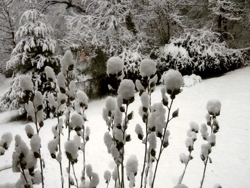snow flowers-nov-2014