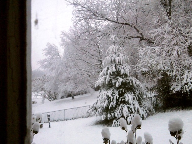 snow-nov-2014-back