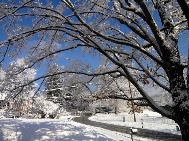 snow-street-trees-sky-nov-2014