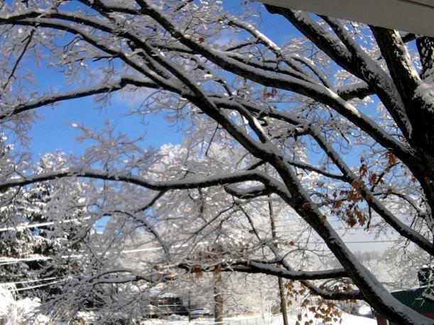 snow-trees and blue sky-nov-2014