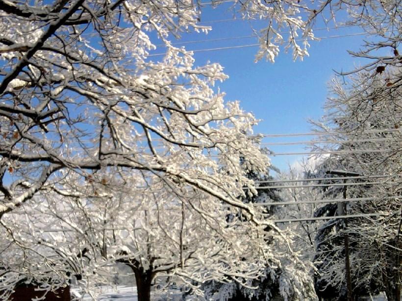 snow-trees-blue sky-nov-2014