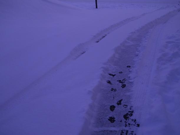 my snowy drive