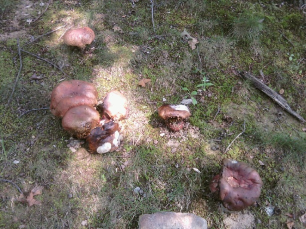 Mushrooms/Fungi???
