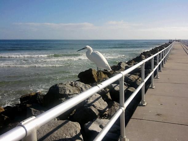 friendly bird
